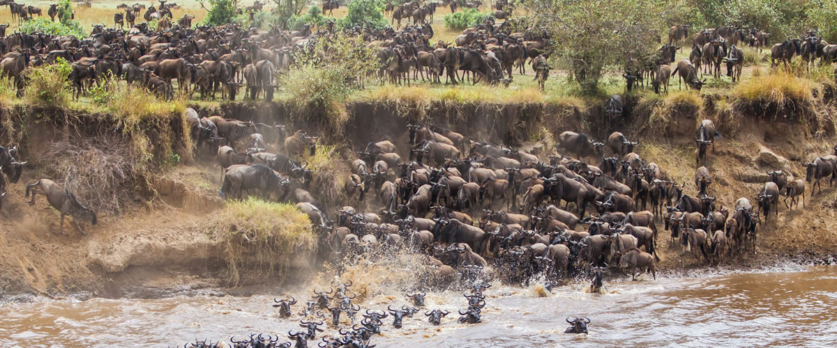 Kenya-Wildebeest-Migration