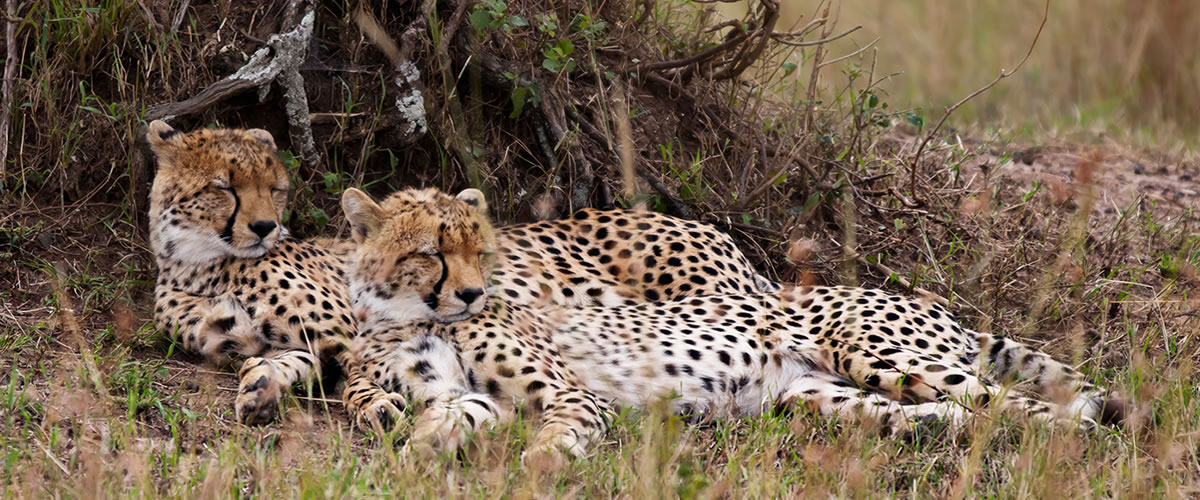 Kenya Wildlife Safaris