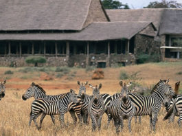 Kenya Wildife Safaris