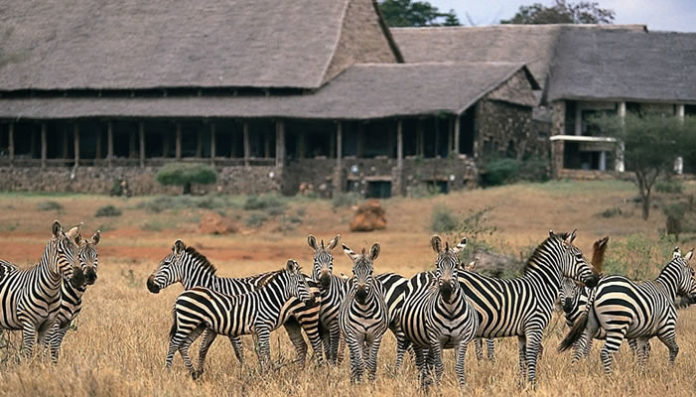 Kenya Wildife Safaris